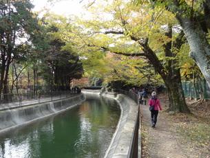 琵琶湖疎水 (日本3大疎水)の写真素材 [FYI00055444]