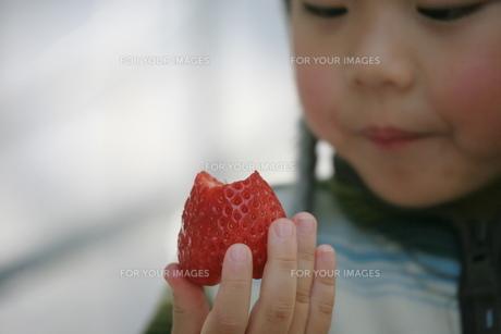 イチゴのデザートの素材 [FYI00055616]