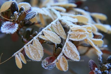 霜の素材 [FYI00055624]
