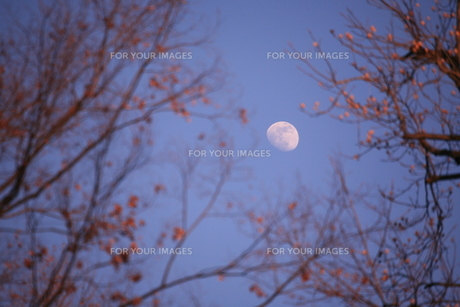 月の素材 [FYI00055679]