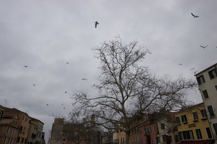 cloudy01の写真素材 [FYI00055915]