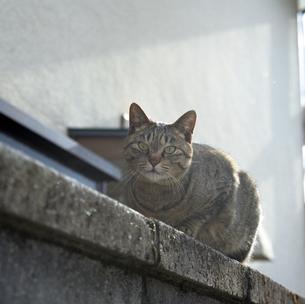 Cat Walkの写真素材 [FYI00055921]