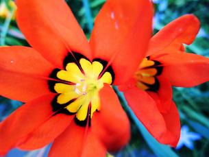 オレンジ色の花の素材 [FYI00056053]