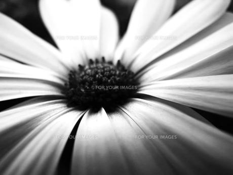 コントラストの花の写真素材 [FYI00056069]