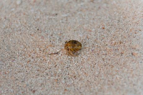砂浜の上にいるヤドカリの写真素材 [FYI00056276]