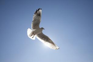 カモメの羽と太陽の素材 [FYI00056302]