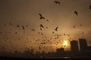 夕暮れの都会の不吉な鳥の集団の写真素材 [FYI00056337]