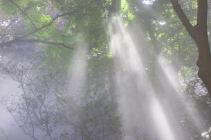 森林の霧の写真素材 [FYI00056421]