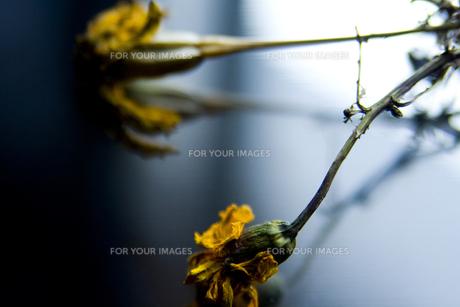 花の素材 [FYI00056698]