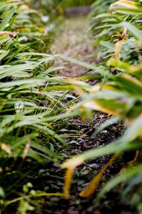 草の小路の素材 [FYI00056753]