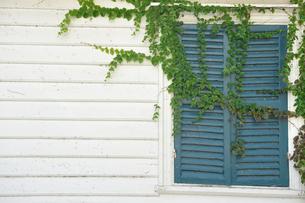 窓と植物 横の写真素材 [FYI00056919]