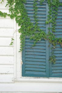 窓と植物の写真素材 [FYI00056926]