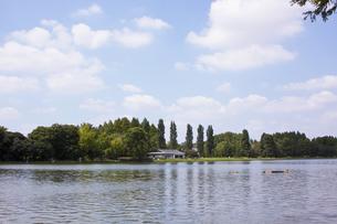 三郷公園から見た水元公園の写真素材 [FYI00056942]