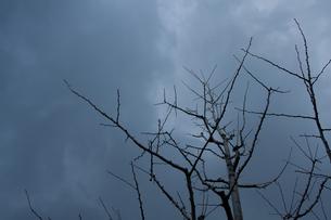 枝の素材 [FYI00057059]