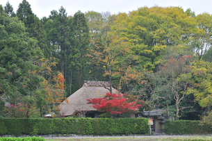 秋の嵯峨野の写真素材 [FYI00057240]