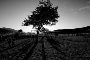 木と人の影の写真素材 [FYI00057422]