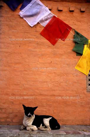 犬と祈りの旗の素材 [FYI00057495]