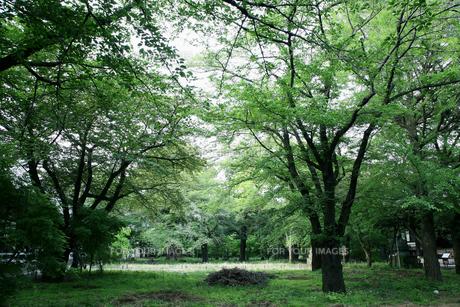 森林の素材 [FYI00057552]