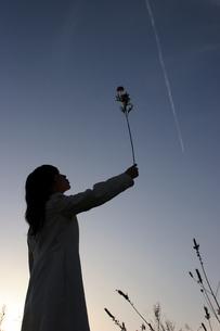 飛行機雲とアザミの造花と女性の写真素材 [FYI00057562]