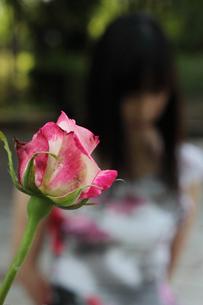バラとアウトフォーカスの女性の写真素材 [FYI00057573]