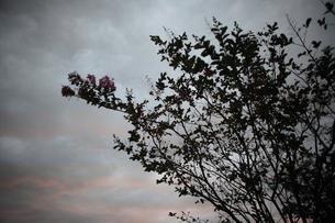 夜明けの空に木の枝のシルエットの写真素材 [FYI00057583]