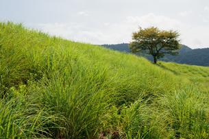 丘に立つ一本の木の写真素材 [FYI00057661]