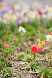 雨に濡れる花壇の写真素材 [FYI00057665]