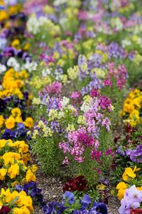 雨に濡れる花壇の写真素材 [FYI00057668]