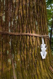 注連縄を巻いた御神木の写真素材 [FYI00057706]