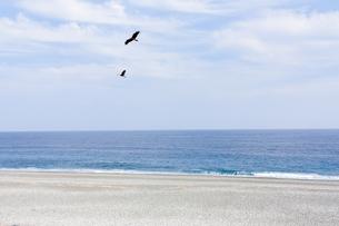 海辺を舞う二羽のやはぶさの写真素材 [FYI00057709]