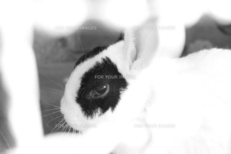ウサギの瞳の素材 [FYI00057727]