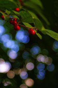 木の実の素材 [FYI00057735]
