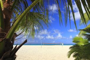 マニャガハ島 ヤシの木越しに見えるバレーボールコートの写真素材 [FYI00057996]