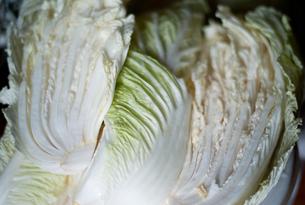白菜の写真素材 [FYI00058090]
