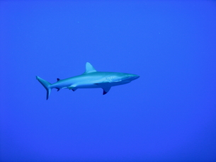 サメの写真素材 [FYI00058461]