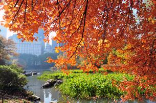 セントラルパークの紅葉の写真素材 [FYI00059610]