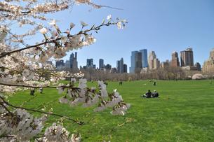 セントラルパークの桜の写真素材 [FYI00059652]