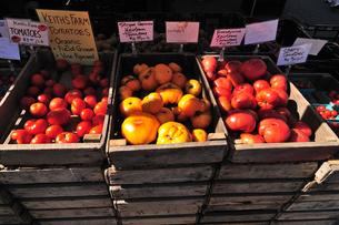 オーガニックトマトの写真素材 [FYI00060301]