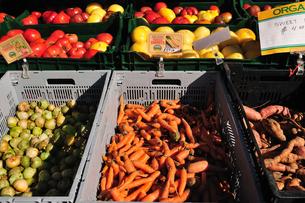 有機野菜の写真素材 [FYI00060308]