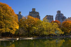 秋のセントラルパークの写真素材 [FYI00060519]