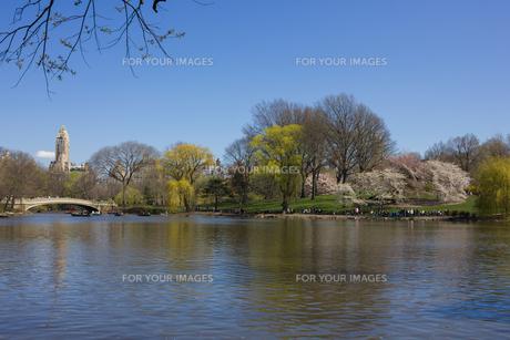 春のセントラルパークの写真素材 [FYI00060545]