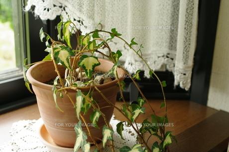 窓辺の観葉植物の素材 [FYI00060672]