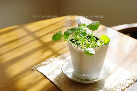 窓辺の観葉植物の素材 [FYI00060679]