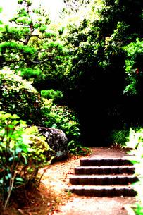 林の中へと続く道の写真素材 [FYI00060765]