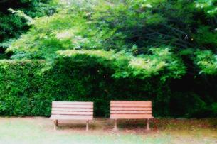 緑に囲まれたベンチの素材 [FYI00060798]