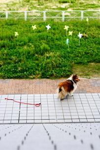 自由な犬の写真素材 [FYI00060846]