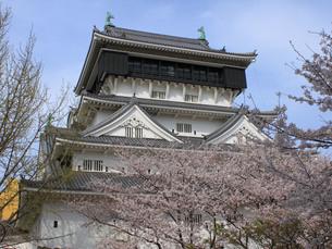 桜舞う小倉城の写真素材 [FYI00060973]