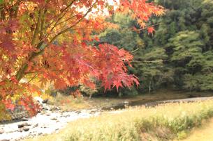 魔林峡の紅葉の写真素材 [FYI00061011]