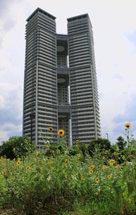 超高層マンションと向日葵の写真素材 [FYI00061012]