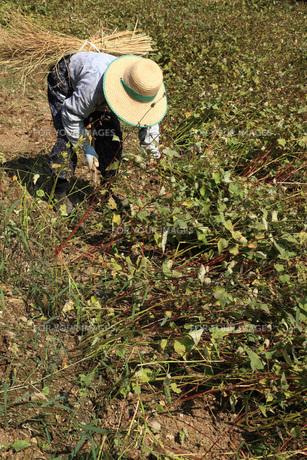 秋蕎麦の収穫作業の素材 [FYI00061056]